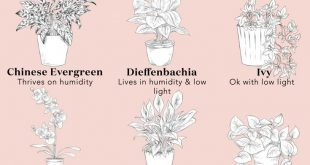A Guide To The Best Plants For Your Bathroom