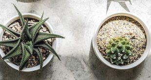 Cute DIY Cactus Wall Art - Free Printable Inside For You